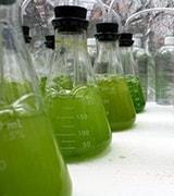 Extensión Bioenergía